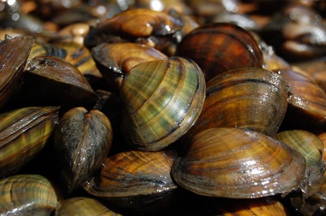 mussels marketing database